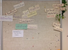 Kate Leonas word wall